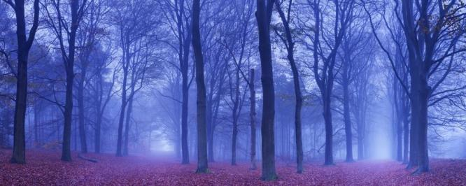 Two paths in a dark and foggy forest, The Netherlands