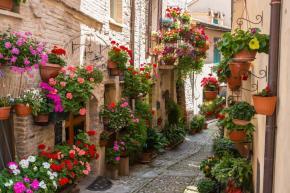 Vicolo storico con fiori